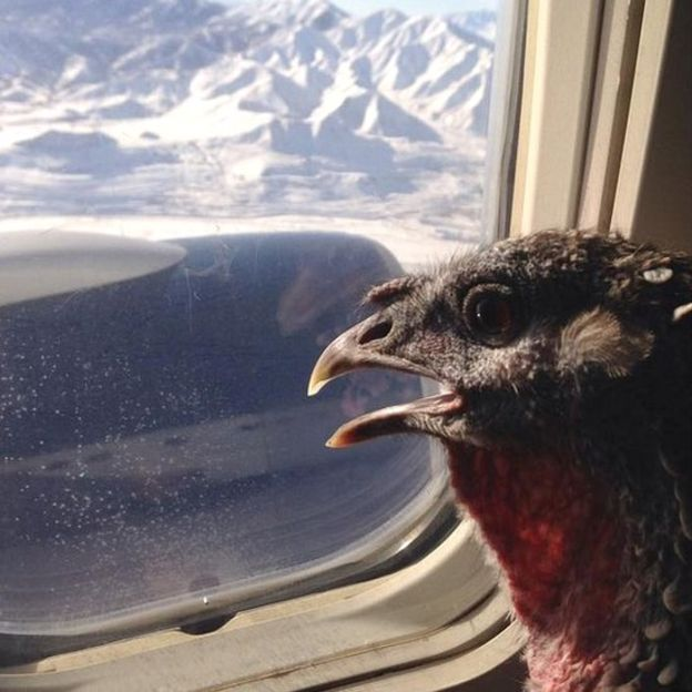 Turkey Window Seat