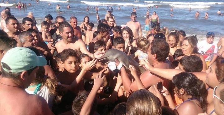 Dolphin Selfies